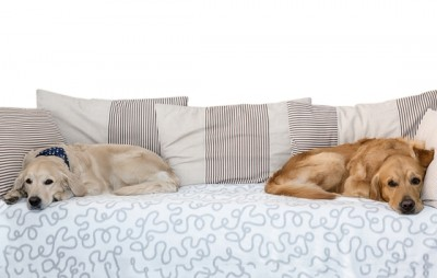 DOG-SOFA-BED1-e1405840001169